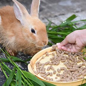 Rabbit diet tips from Clarendon Street Vets