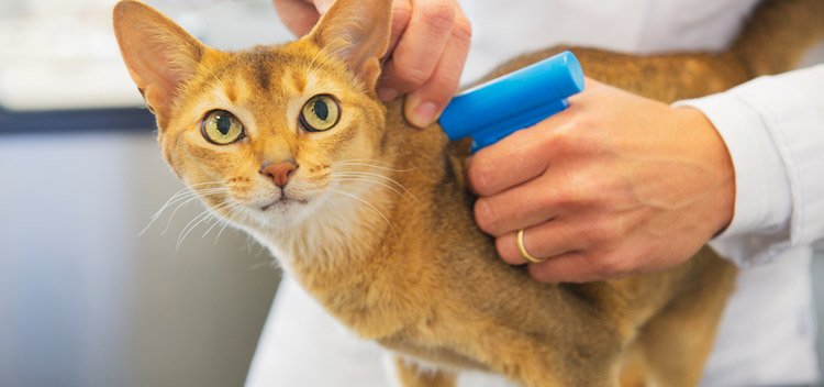 Microchipping for pets in Cambridgeshire