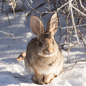Winter care tips for rabbits in Cambridgeshire