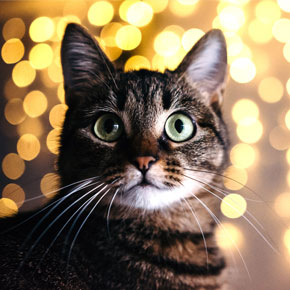 Christmas treats for cats: Clarendon Street Vets' top three