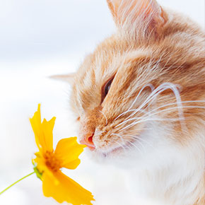 Our advice for easing hay fever in cats