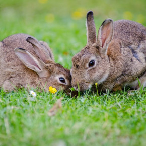 Keep your rabbit safe outdoors in Cambridge