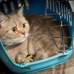 Light night care for cats with Clarendon Street Veterinary Surgery