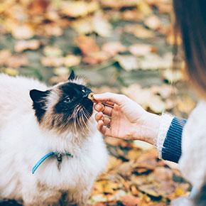 Top tips for cat treats