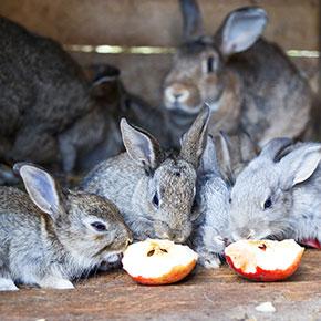 Perfect picks for rabbit treats in Cambridgeshire