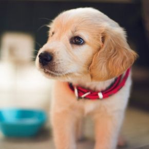 Tips for bringing a new puppy home