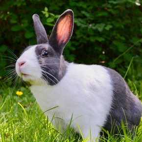 Spring health advice for rabbits in Cambridgeshire