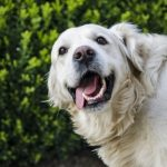 Ways to enrich your dog's life in Cambridgeshire