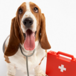 Head vet Patrick explains how to recognise 7 conditions that require first aid for dogs.