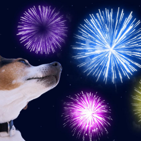 How to prepare your pet for fireworks night.