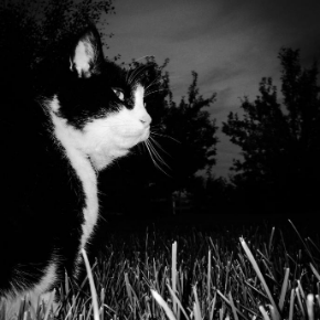 Clarendon Street Veterinary Surgery has some dark night safety advice for cat owners.