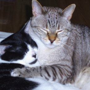 Get Clarendon Street Veterinary Surgery's senior cat checklist