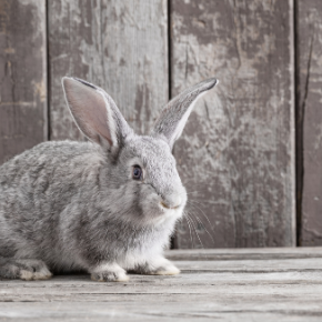 Head nurse Anna Forrester has these top tips for senior rabbit care