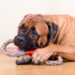 How to buy the perfect dog toys this Christmas