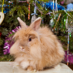 Bunny proofing the homes of Cambridge for Christmas