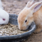 Clarendon Street Veterinary Surgery's rabbit meal planner is perfect for the new year