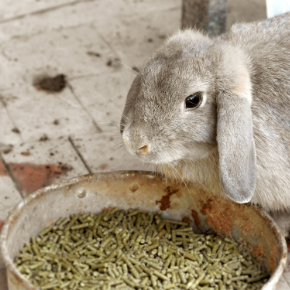 21 foods that can harm your rabbit in 2021