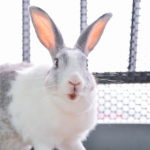 Pet Dental Health Month dental advice for Rabbit owners.