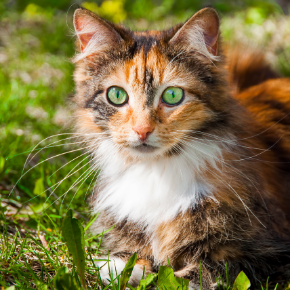 Catherine has some spring advice for spotting cat fleas