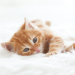 Kitten care advice from the team at Clarendon Street Vets