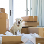 Clarendon Street Vets' tips for moving house with your dog