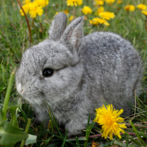 Clarendon Street Veterinary Surgery's Summer health advice for rabbit owners