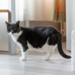 Clarendon Street Vets' advice on post-covid cat obesity & separation anxiety