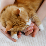 How to find the right vet for your cat