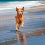 Read Clarendon Street Vets' tips and help your dog make the most of the late summer sun
