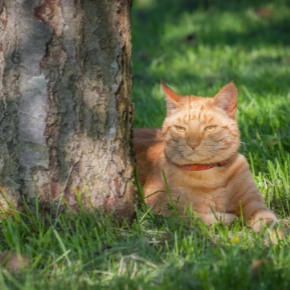 Patrick von Heimendahl recommends ways to keep your cat cool in summer