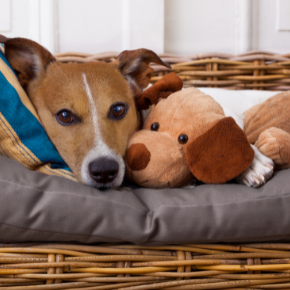 Clarendon Street Vets' tips on reducing separation anxiety in dogs