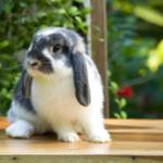 The most important behaviour Cambridge rabbit owners must recognise