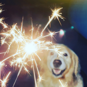 Clarendon Street Vets' explain how to prepare your dog for firework season